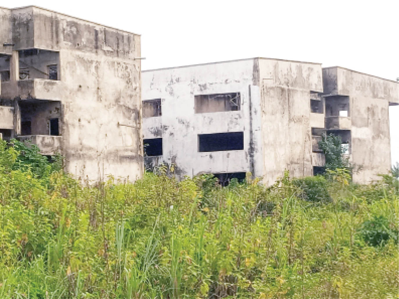 Over-grown weeds is a common feature of the abandoned schools like this one in Isara-Remo
