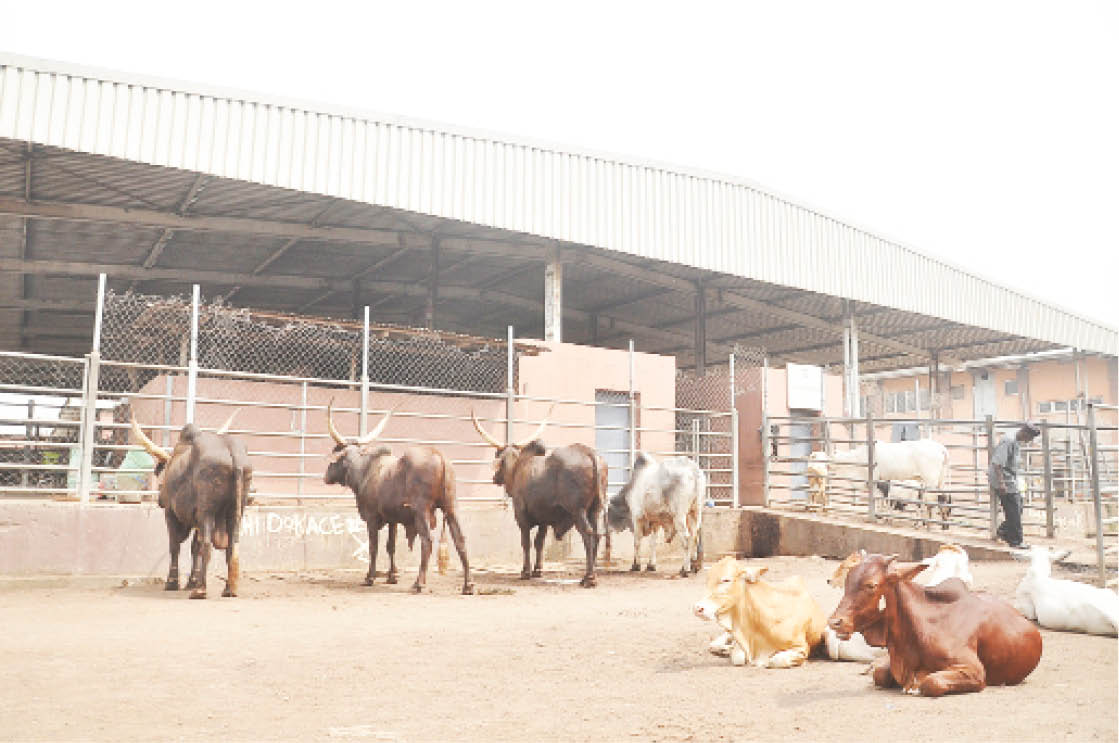 Few cows available for slaughter in Lagos