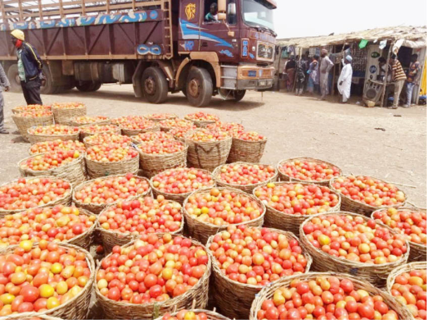 Baskets of tomatoes waiting to be loaded for movement to the southern parts of the country at Kwanar Gafan Tomato Market in Kano State Photo: Ibrahim Musa Giginyu
