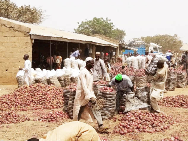 Marketers package onions with the hope the impasse between the union and government would soon be resolved Photo: Clement A. Oloyede