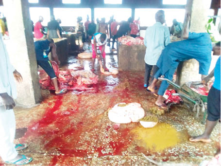 Some children fetching blood from a slaughtered cow
