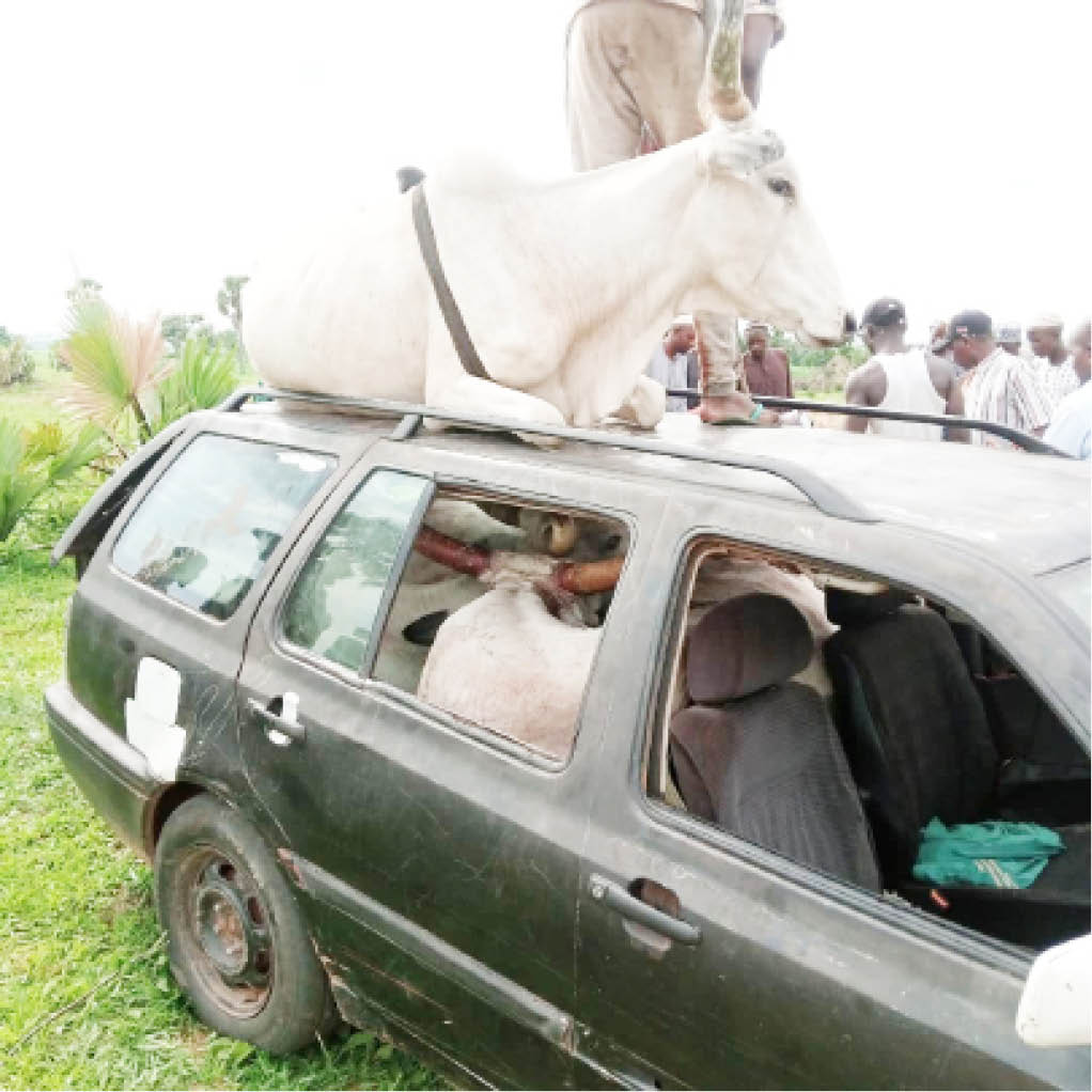 Cattle owners transporting their injured cows in Nasarawa State yesterday