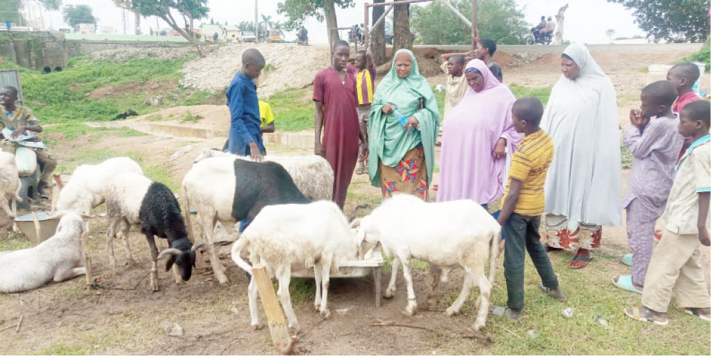 Some ram buyers in Suleja lamenting the hike in prices