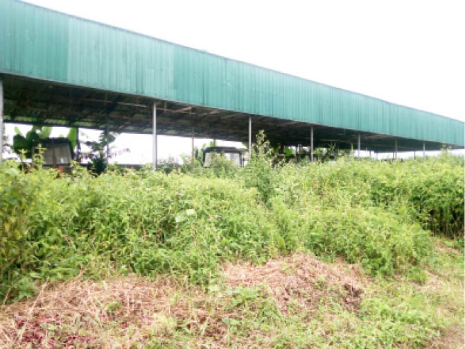 Factory hall covered by weeds