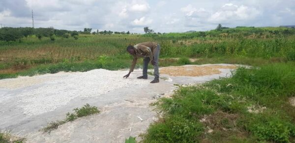 Households, three a day, take turns to dry harvest on the flats of Kpanyi Kpanyi all week,